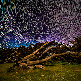 Roots of the Universe by Nick Venton - Landscapes Starscapes ( tree, roots, star, trails )