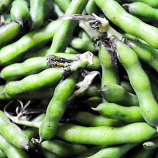 Fresh Fava Beans, Edamame-Style