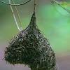 Weaver's Nest