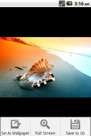 Seashell Photography - screenshot