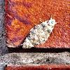 lichte korstmosuil (Bryophila domestica)