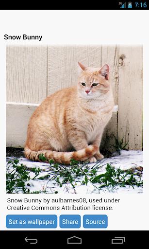 猫壁纸 個人化 App-癮科技App