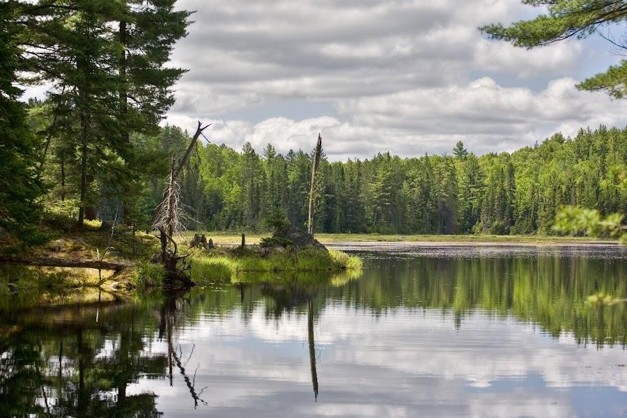 Algonquin Park by Dan Roberts - Landscapes Forests