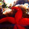 Estrella de mar. Starfish