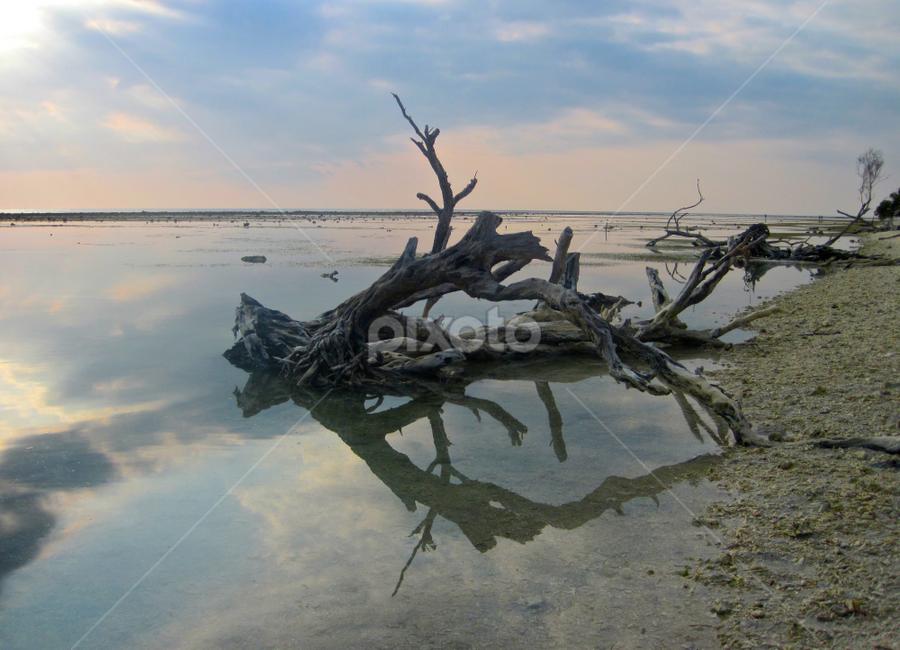 Driftwood by Venetia Featherstone-Witty - Landscapes Waterscapes ( watersacpe, driftwood, indonesia, travel, seascape, gili islands,  )