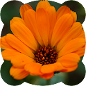 Jigsaw puzzles. Flowers icon