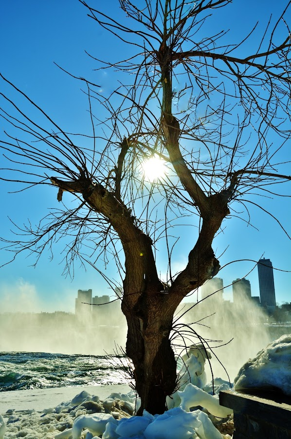 aMERICAN FALLS...PART OF NIAGRA FALLS IN BACKGROUND by Rhonda Rossi - Nature Up Close Trees & Bushes (  )