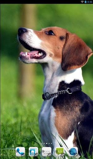 【免費個人化App】Beagle Theme - Nova/ADW/GO-APP點子