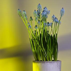 by Louis Heylen - Flowers Flower Arangements