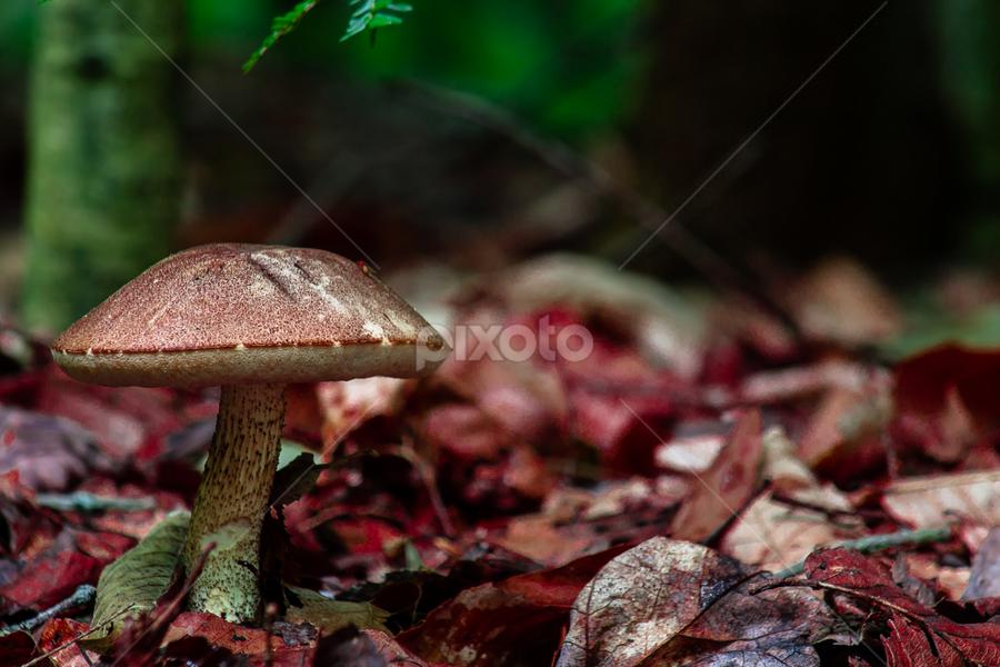Mushroom by Dave Martin - Nature Up Close Mushrooms & Fungi ( mushroom )