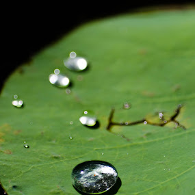 Water Droplet by Jane Chen - Nature Up Close Natural Waterdrops