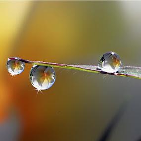 :: Shine :: by Dedy Haryanto - Nature Up Close Natural Waterdrops