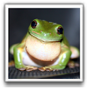 Cute Frog Wallpapers logo
