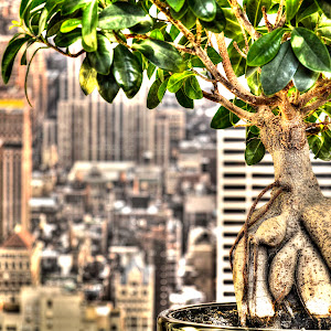bonsai_tonemapped.jpg