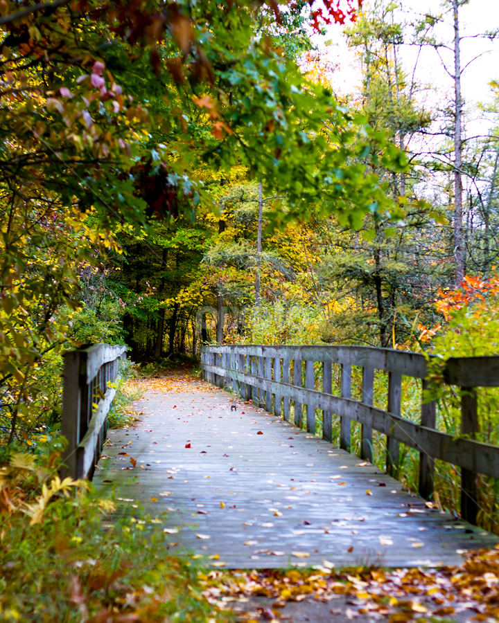 Kensington Way by Cristy McAuley - Landscapes Forests ( walking path, nature, color, autumn, colorful, fall, forest, bridge )