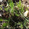 Club fungi. Mushroom