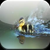 Action bird HD Wallpaper