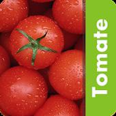 Pragas do Tomate