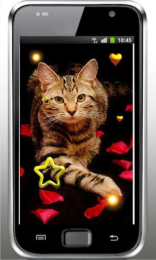 Valentine Kitty live wallpaper