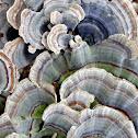 Unknown Fungi