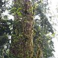 oregon plants