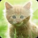 3D Cat icon