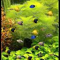 Green Aquarium LiveWallpaper icon