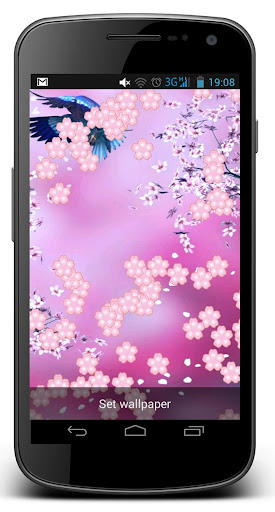 Cherry blossom Live Wallpaper
