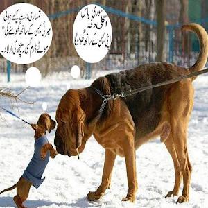urdu funny jokes 2014