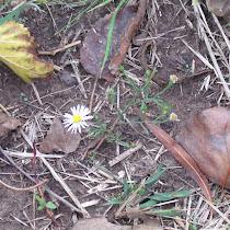Biodiversity @ NW Oklahoma