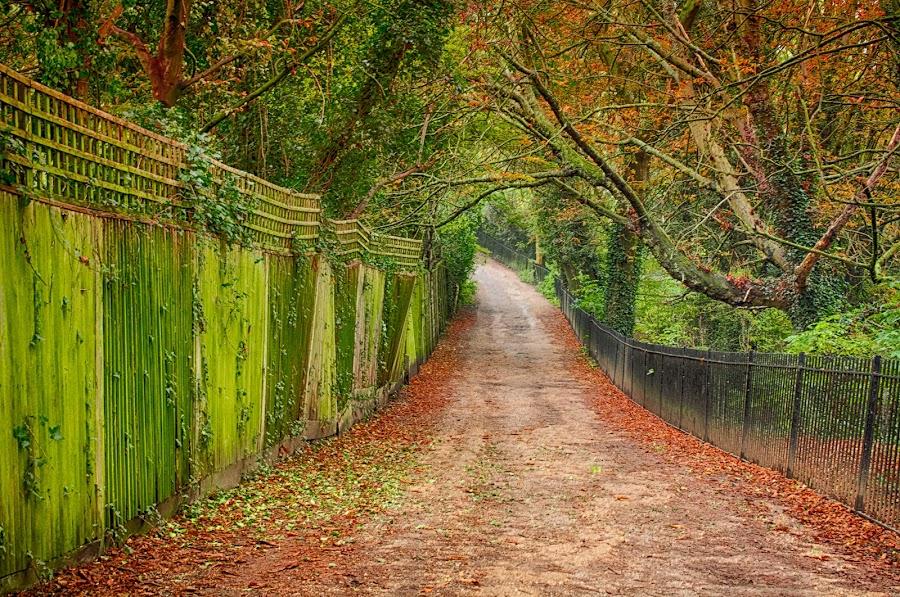 Autumn by Nizam Akanjee - City,  Street & Park  Neighborhoods ( autum, fall colors, autumn, fall,  )