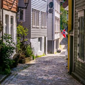Streets of Bergen, Norway. by Paulius Bruzdeilynas - City,  Street & Park  Street Scenes ( bergen, old, houses, cat, wood, street, stone, rock, house, colours, norway, norwegian, bertgen, norge, town, downtown, animal )