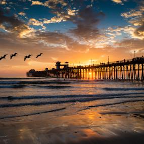 Pelican Overflight by Alan Crosthwaite - Landscapes Beaches ( oceanside, peaceful, southern california, waves, pacific ocean, tourism, ocean, travel, coastal, gliding, destination, piers, serenity, sunset, overflight, pelicans, pier )