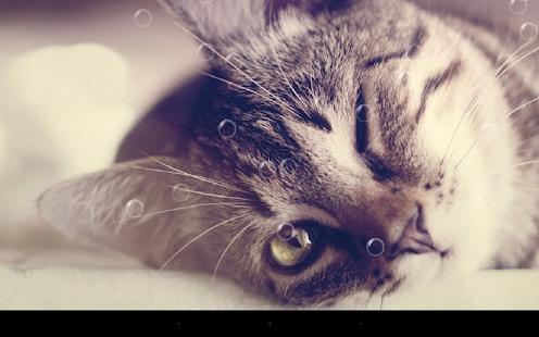 搞笑貓咪動態桌布