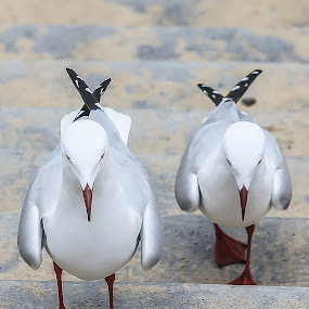 Walk this Way by Anthony Rutter - Animals Birds ( walking, seagull, stairs, pairs, seagulls,  )