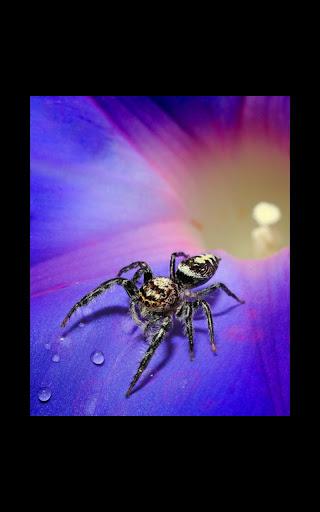 My Photo Wall Spider LWP