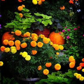 Gardener's Pride by Randi Grace Nilsberg - Flowers Flower Arangements ( orange, natchitoches, colorful, bright, autumn, pumpkins, fall, louisiana, textures., flowers, floral, halloween )