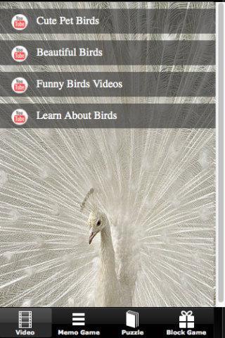 Bird Story
