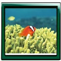 Aquarium Top Photo Gallery logo