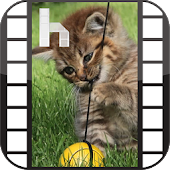 Kittens Video Homescreen