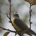Social Flycatcher, Mosquero de corona colorada