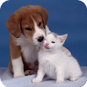 Dogs and Cats Wallpapers icon