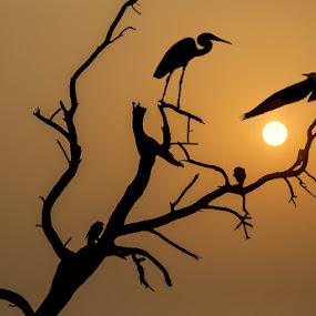 by Mukesh Chand Garg - Landscapes Sunsets & Sunrises (  )