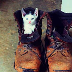 cutest kitten by Charles Saunders - Novices Only Pets ( boot, kitten, cat, clean, adorable, cute, shoe, #GARYFONGPETS, #SHOWUSYOURPETS )