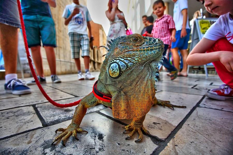 by Lerga Roberto - Animals Reptiles