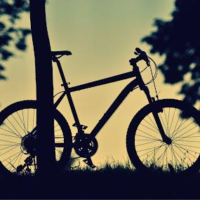 Resting Bike by Zec Mladen - Transportation Bicycles ( bike, sunset, sport, trees, bicycle )