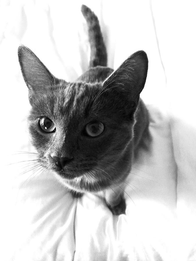 Fancy That by Anastasia Foss - Black & White Animals ( blackandwhite, kitten, cat, meow, closeup, animal )