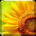 Sunflower Live Wallpaper icon