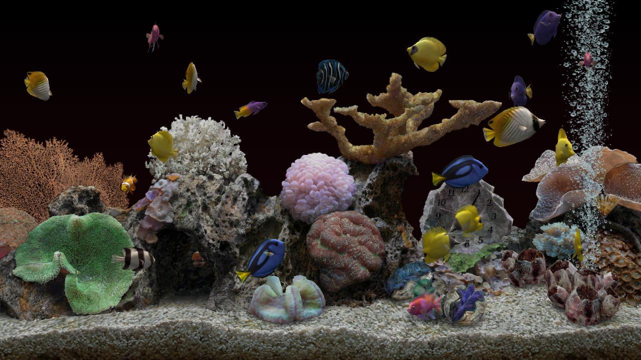 Aquarium store rockville congressional aquarium pet for Fish store baltimore