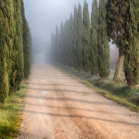 road in a foggy  morning. by Maurizio Martini - City,  Street & Park  Street Scenes ( bright, travel, vibrant, leaves, alley, nature, autumn, foliage, trail, sunshine, colors, forest, tourism, sunlight, vitality, rural, country, environment, season, trees, scene, branch, day, view, walk, footpath, colorful, deciduous, vivid, way, road, lane, tranquil, sunny, path, picturesque, park, beautiful, track, scenic, morning, woods, fog, background, fall, vista, outdoor, scenery, october, mist,  )
